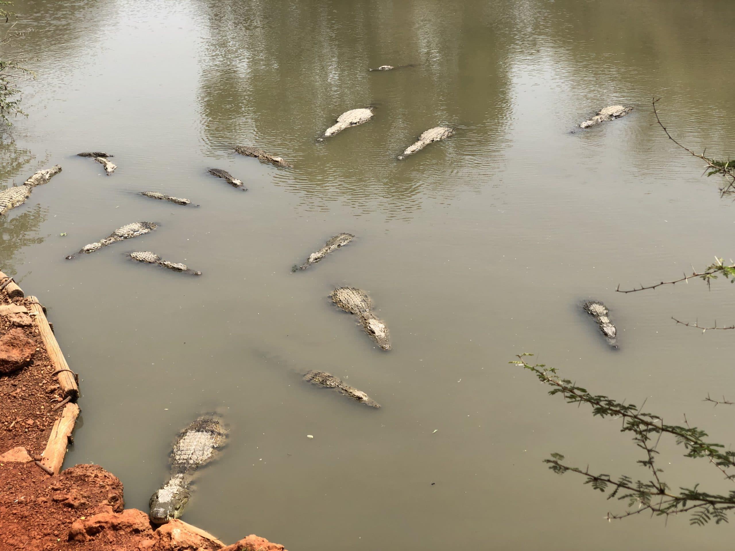 Het natuurreservaat van Bandia