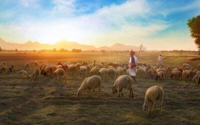 Ezekiël 34, 11-12 + 15-16a