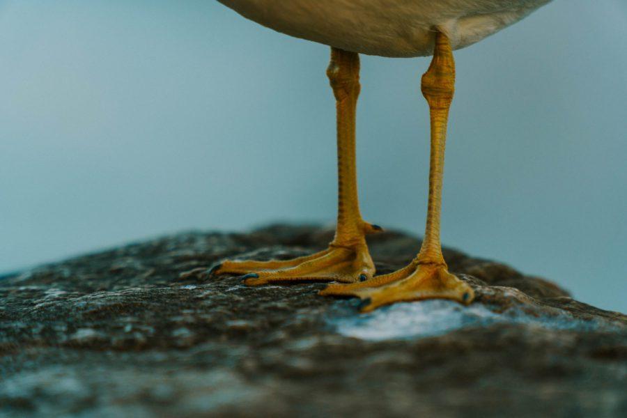 Onder de veren
