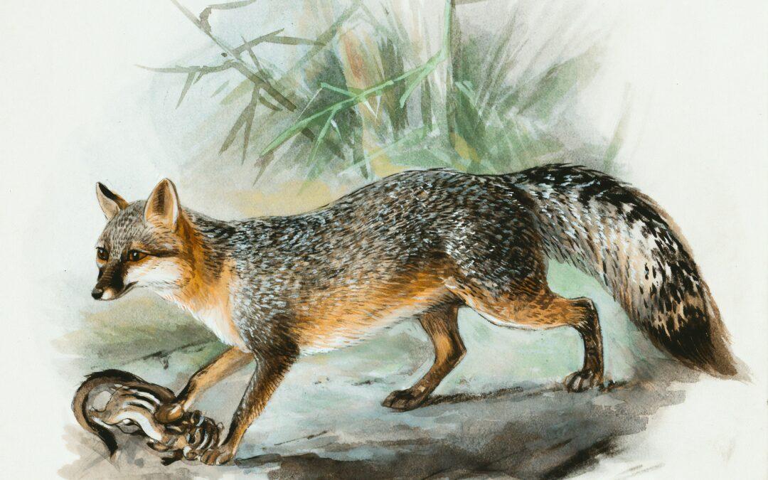 Ontslaving: het konijn en de vos