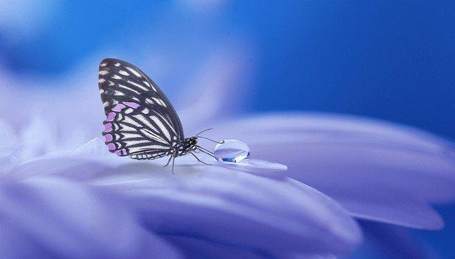 Meditatie en roesmiddelen: begeleid