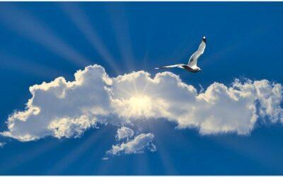 Meditatie en roesmiddelen: dieren