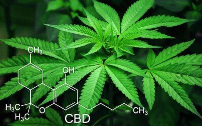 Cannabis: geliefd en verguisd